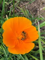 Bienenableger für wesensgerechte