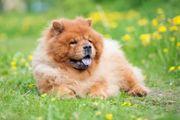 Hundehaftpflicht - Vergleich preiswerter Tarife