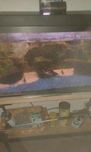 135 Liter Aquarium