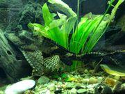 Dringend Aquariumfische herzugeben