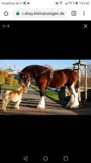 Pferd reiten und fahren gesucht