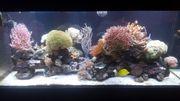 Meerwasser Aquarium Becken