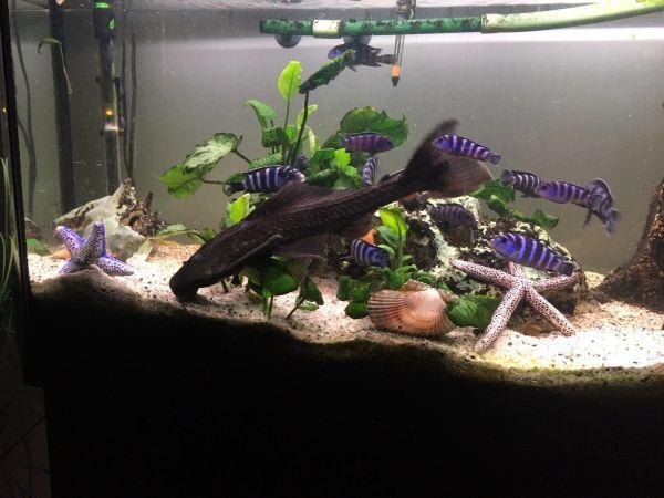 aquarien fische kaufen aquarien fische gebraucht. Black Bedroom Furniture Sets. Home Design Ideas