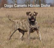 Exklusive Top Dogo