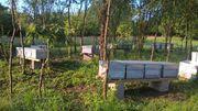 Komplette Bienenvölker mit