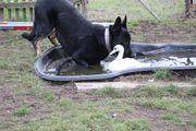 Wolfshund- Schäferhund Welpen zu verkaufen