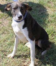 Janosch Junghund Familienhund