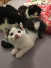 Zwei süße Katzen