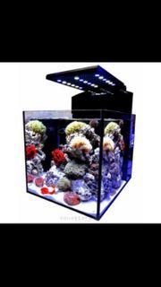 Meerwasseraquarium Aqua Medic Cubikus CF