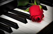 Gesangsstunden Vocal coaching