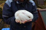 Zwei wunderschöne Kaninchenbabys