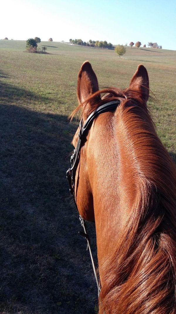 Pferd Gesucht