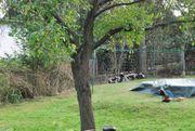 Garten Kleingarten Grundstück zum Kauf