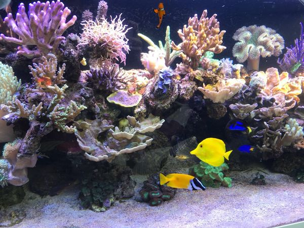 aquarium aufl sung meerwasser forstinning. Black Bedroom Furniture Sets. Home Design Ideas