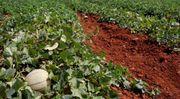Brasilien 20 Ha Grundstück mit