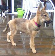 Ginnie, 5 Monate