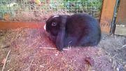Unser Hase Schnuffel sucht ein