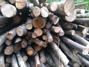 Brennholz Günstig bei Selbstabholung 65Euro