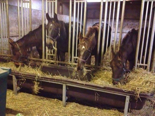 Suche gutes Heu für Pferde