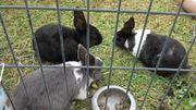 Kaninchen Paar (er