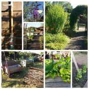 Urban Gardening in