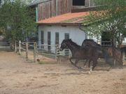 1-2 Pferdeboxen