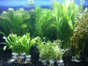 Aquarium Pflanzen Set 5 Bunde