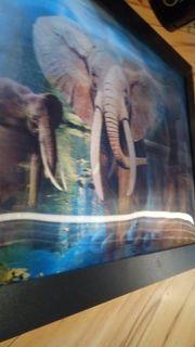Elefanten bild 3