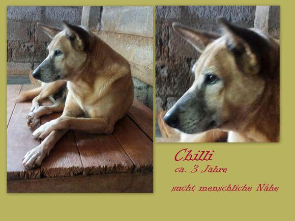 Chilli ist unglücklich im Tierheim - Burladingen - MischlingerwachsenChilli ist unglücklich im TierheimAlter: ca. 3 JahreKastriert: jaChilli ist seit 3 Monaten in Padmas Tierheim auf Sri Lanka. Sie kam nicht allein sondern mit ihrer Tochter Dolly und deren Bruder oder Vater (unklar). Dollyi - Burladingen