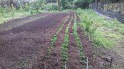 Gartengrundtück