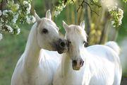 Hallo Pferdeliebhaber in