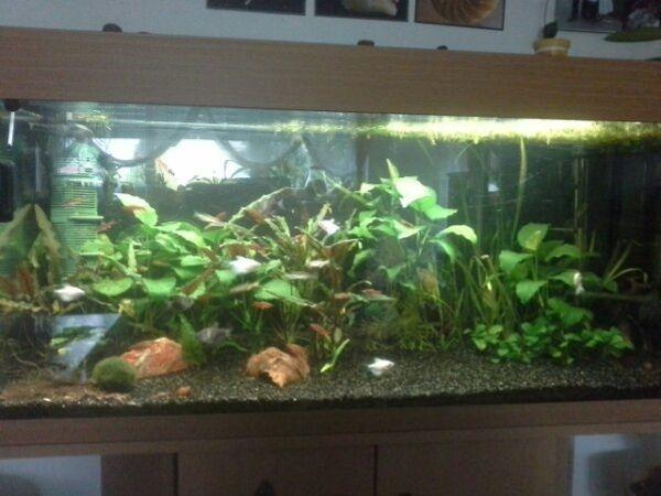 100x40x40 aquarium kleinanzeigen kaufen verkaufen bei. Black Bedroom Furniture Sets. Home Design Ideas
