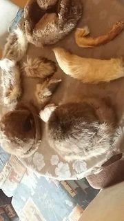 Drei verschiedene Pelz Hüte und