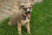 Hundekind Rocco wünscht