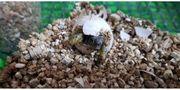 Süße kleine griechische Landschildkröten zu