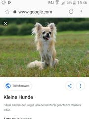 ich suche kleinen hund kleinbleibend