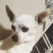 Chanel sucht ihr Zuhause