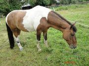 Pflegebeteiligung Pferd Pflegepferd