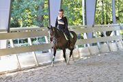 Pferd sucht Reiter in Rodgau