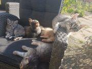 Katzenbabies in liebevolle Hände abzugeben