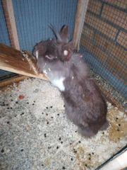 Junges Kaninchen Mädchen
