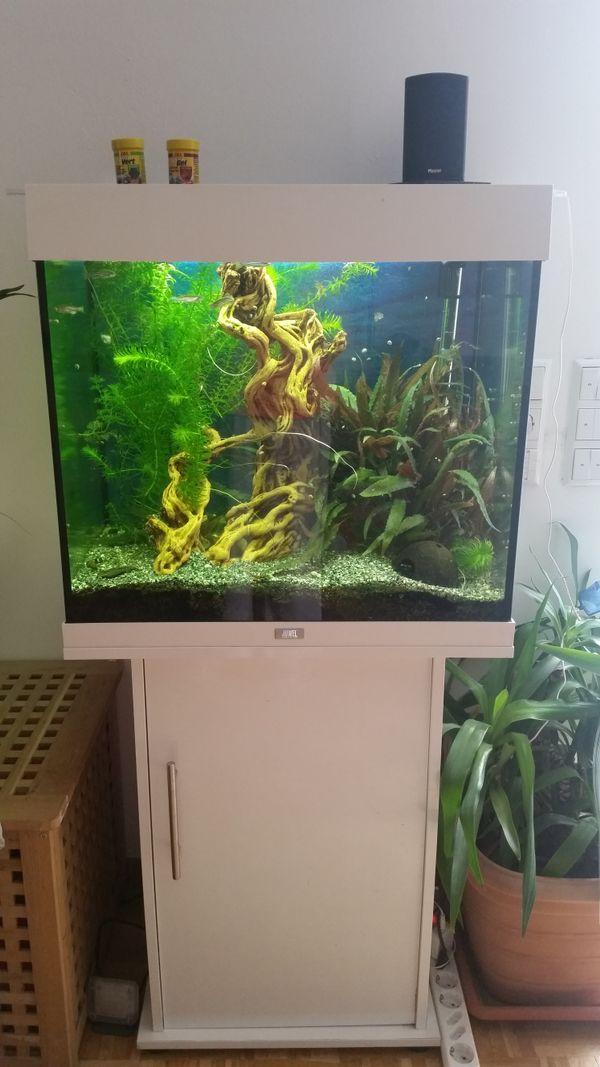 lido aquarium kleinanzeigen kaufen verkaufen bei deinetierwelt. Black Bedroom Furniture Sets. Home Design Ideas