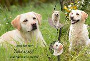 Herzensprojekt Hund : Collage
