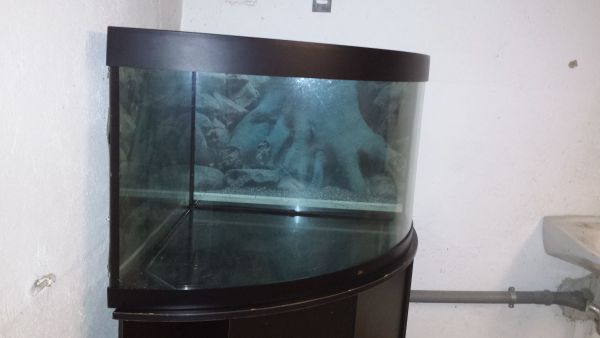 Aquarium Als Terrarium Verwenden : Undichte kleinanzeigen kaufen verkaufen bei deinetierwelt
