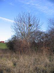 Gartenland in Zehna /