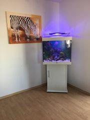 Meerwasser Aquarium 200l
