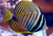 Meerwasserfisch