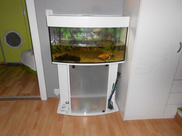 aquarium 120 l mit gebogener frontscheibe in gernsbach. Black Bedroom Furniture Sets. Home Design Ideas