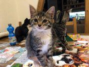 Katzenkinder suchen