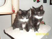 Kitten vom Kahmerischen